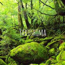 もののけ姫の舞台 白谷雲水峡  神秘的な空気感  #屋久島#白谷雲水峡#世界遺産