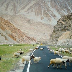 インド、ラダックの山奥。チベットやパキスタンの国境近くに素晴らしい景色がいっぱいある。