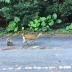 屋久鹿と屋久猿♡