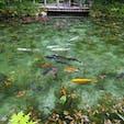 岐阜県の通称「モネの池」