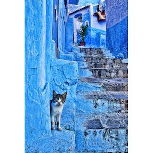 モロッコ、シャウエンの猫。 青い街に猫は合います。