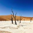 デッドフレイ ナミブ砂漠、ナミビア  枯れても数百年立ち続ける木。