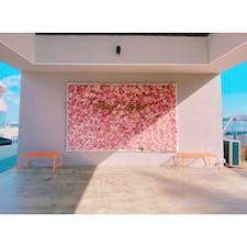 韓国蔚山のカフェ【Hey-mer】🍰☕️♪♪♪  入り口にある花の壁が素敵です♡
