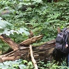 札幌  円山動物園近くで遭遇した野生のりす