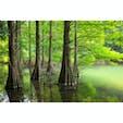 福岡県 〜篠栗九大の森〜 以前もこの場所の写真は 投稿したことあるのですが、 今回は一眼レフで撮影したので 再度投稿です📸