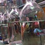 瓶の中で金魚が振り返ってました。 金魚売りの屋台、歳末の風景 #ベトナム #Quang_Ngay