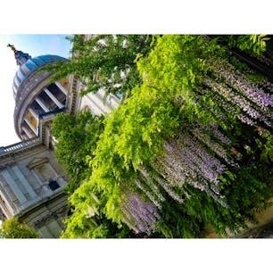 🇬🇧London St. Paul's Cathedral 教会内の広さの凄さは大前提に、 150段以上を登っての見渡す街の景色は格別。 オススメのまわり方は… 教会内を堪能してから →150段登って下りて →下のカフェでコーラ買って →教会横の芝生でゴロン休憩🥤