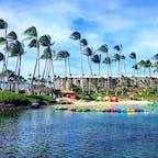 ハワイ島 ホテル:ヒルトン ワイコロア ビレッジ ホテル内の海水プールは、ホヌが泳いでました。 #ヒルトンワイコロアビレッジ