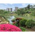 tripnoteが広島勧めてくるから来たよ!最初は縮景園。 曇り予報って聞いてたけど日が出てきて青と緑がいい感じに。 紫陽花や菖蒲、綺麗でした。抹茶チーズケーキ、美味しかったです!