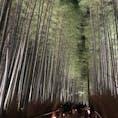 漢字の国の人ばかりだったなぁ。北山杉のライトアップはまさに雅なり。今は閑かでしょうね。