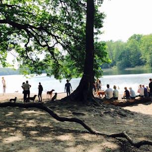 ベルリン郊外、グルーネヴァルト湖  犬が戯れ、家族で語らう。 ドイツの人たちの休日の様子。