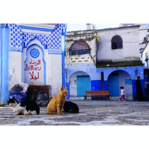 モロッコ、シャウエン。 猫の楽園。