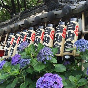 白山神社(文京区) あじさい祭り(今年は中止でした…)