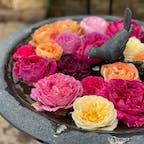 十勝ヒルズ、夏バラが見頃でした🌹小雨の中だったけど、雨に濡れたバラもきれい。