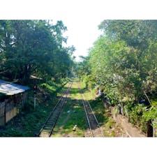 【ミャンマー🇲🇲】ヤンゴン  お散歩途中に見つけた道。 「あ、ウクライナの愛のトンネルっぽい」 と思って撮ったもの。 友人には全然見えないと言われてしまいましたが どうでしょう、、。  #ミャンマー° #ヤンゴン #2019/02/07