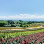 お花畑がカラフル🌸背景に広がる美瑛の丘の風景も最高です #四季彩の丘