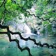 #過去pic #奄美大島 #ジャックと豆の木