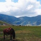 雲南省 香格里拉の草原 2016.09