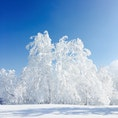 北海道のスキー場 雪がふわっふわだった❄️️
