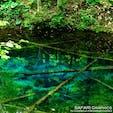 神秘の青さをたたえる北海道清里町にある神の子池。アイヌ語で神の湖と呼ばれる摩周湖の伏流水が1日12,000tも湧き出しています。水深5メートルの水底まで見通せる透明度の高い池には、オショロコマが泳ぐ姿も。森の静寂のなかで聞こえる鳥の声にも癒されます!#北海道 #清里町 #神の子池