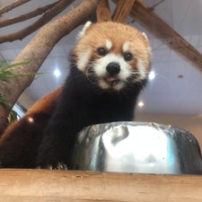 #アドベンチャーワールド #和歌山 #レッサーパンダ  他の動物園よりも、近距離で動物たちを見ることができました♪