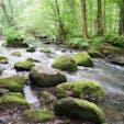 新緑と涼しい風が気持ち良い早朝の奥入瀬渓流。