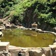 @地獄谷野猿公苑 暑くなってきて温泉に浸かってる姿は見れないけど可愛い子猿がたくさん みんな日陰で毛づくろいしたりお昼寝したりしてました〜