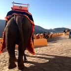 インド🇮🇳 象タクシー 高さあります。左右に揺れます。 タイで乗った時よりも怖かった笑 その分、楽しかった。