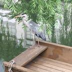 セミの泣き声の中、船の上には鳥が一匹。