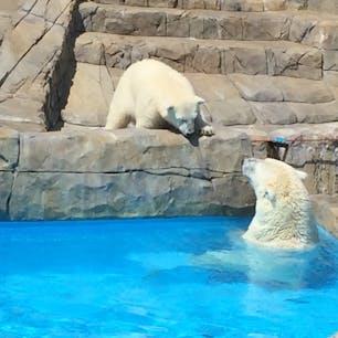 5年前のララとリラ。 まだ水が怖そうだったリラ。 円山動物園