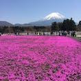 富士芝桜まつり🌸 2017.04