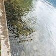 たつこ像前 見えてる影全部魚🐟 像より魚の方が気になる…