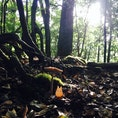 トトロの森①