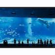 美ら海水族館 in Okinawa  #20200215