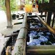 京都 上賀茂神社の花手水