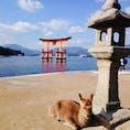 広島*厳島神社