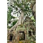 カンボジア、アンコールワット。 ラピュタ感がすごい。