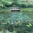 モネの池 綺麗だったな〜! #s岐阜 #202009