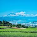 富士山と茶畑!日本らしい絶景🇯🇵✨✨
