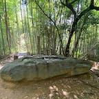 酒船石の消失した石 ①奈良は明日香村に酒船石と言う奇石が有ります。昔は酒を作る石とか薬の調合とか言われましたが、今は占いの道具とハッキリして居ますが、実は此の酒船石は人意的に破られて居ます、昔はその破られて、消失した石は何処に?で話題になって居ましたが、今は解明されましたが?実は公ではなく町の歴史家と有志に寄り探し出されました、と力説する方が酒船石の地元ガイドさんです。 僕はその話に「バック!」と喰いつき 話もそこそこに現地に行きました。  #酒船石の消失石 #サント芹沢鴨の写真 #明日香村