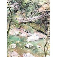 徳島*かずら橋