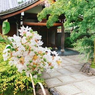 京都嵐山の天龍寺の曹源池庭園付近で美しい百日紅の花が咲いていました✨ 人も少なくてゆっくり出来ました❗️