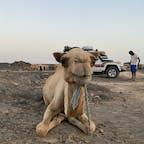 エチオピアのダナキルツアーに行ったときのラクダ🐪