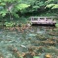モネの池 岐阜県  写真で撮る方が綺麗  ってほんまでした🕊日が照ってる時やともっと綺麗にうつるみたい、残念。