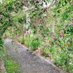 仙台市野草園の萩まつりへ。園内のあちこちで萩がきれいに咲いてて、萩の花をまとわせたトンネルも。  ちなみに仙台市の市花も宮城の県花も萩の花だそうで、イベントの協賛は「萩の月」でおなじみの菓匠三全でした。