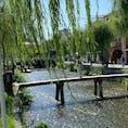 一本橋(行者橋) 京都府京都市東山区にある橋。白川に架かる橋であり、日本百名橋の番外に選ばれている。行者橋、一本橋、阿闍梨橋とも呼ばれる。  #京都  #全国橋巡り  #サント芹沢鴨の写真