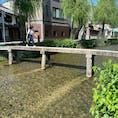 一本橋(行者橋)   #一本橋 #全国橋巡り #サント芹沢鴨の写真