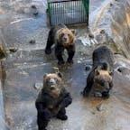 北海道、登別のクマ牧場です みんな元気
