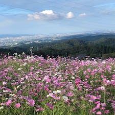 2020.10.10 となみ夢の平 秋桜畑から富山平野を見下ろす