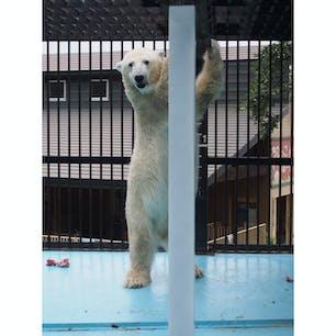 北海道 おびひろ動物園